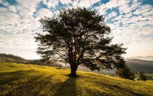 tree-dawn-nature-bucovina-56875